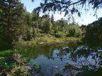 Blue Pond Spring
